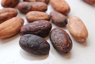 Organic Dry Cocoa Beans