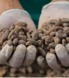 Fine cocoa beans