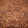 High Quality Bulk Homegrown Coffee Bean